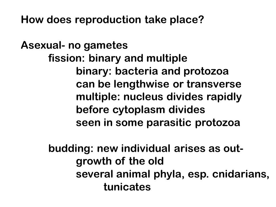 How does reproduction take place