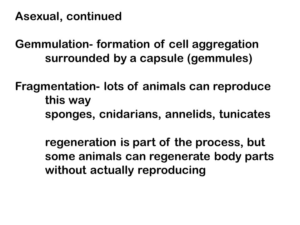 Asexual, continued Gemmulation- formation of cell aggregation. surrounded by a capsule (gemmules) Fragmentation- lots of animals can reproduce.