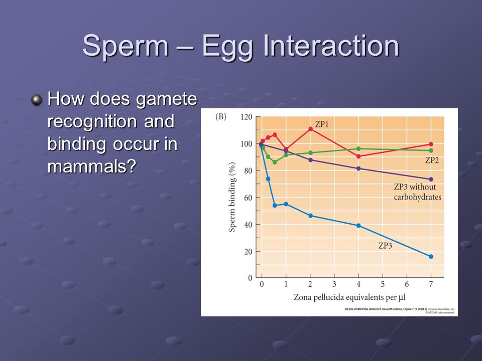 Sperm – Egg Interaction