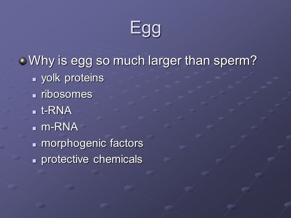 Egg Why is egg so much larger than sperm yolk proteins ribosomes