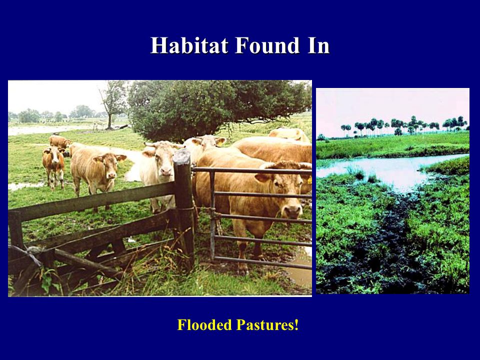 Habitat Found In Flooded Pastures!