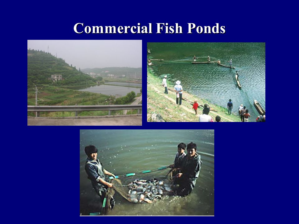 Commercial Fish Ponds