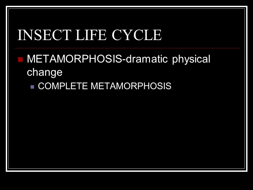 INSECT LIFE CYCLE METAMORPHOSIS-dramatic physical change