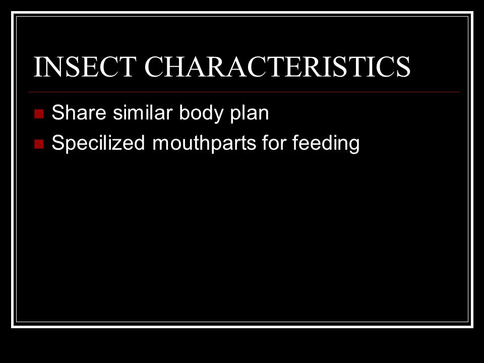 INSECT CHARACTERISTICS
