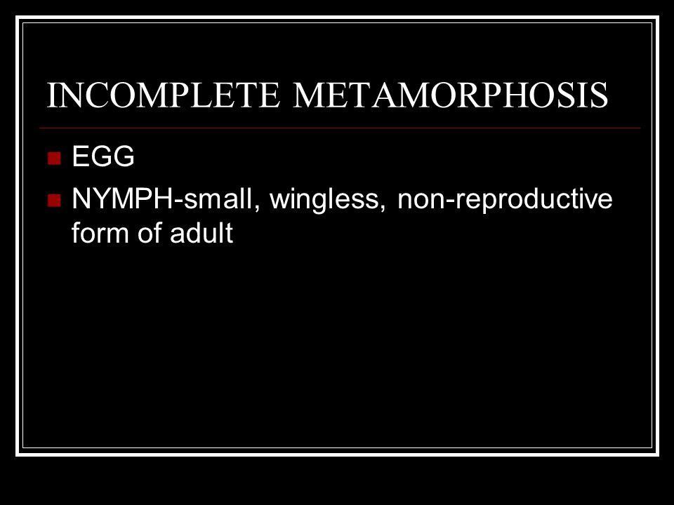 INCOMPLETE METAMORPHOSIS