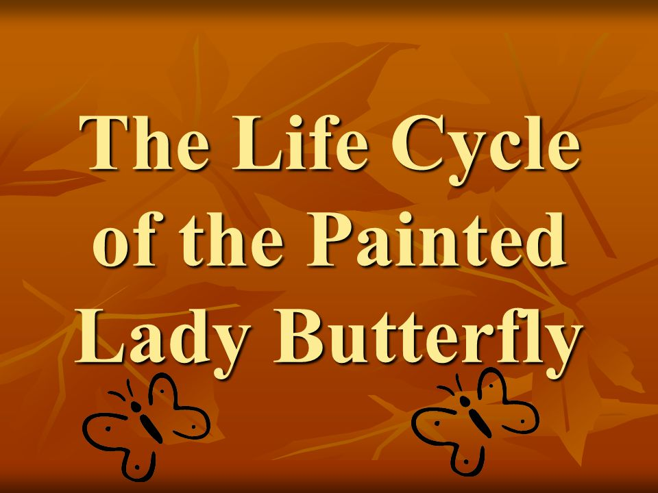 The Life Cycle of the Painted Lady Butterfly  ppt download