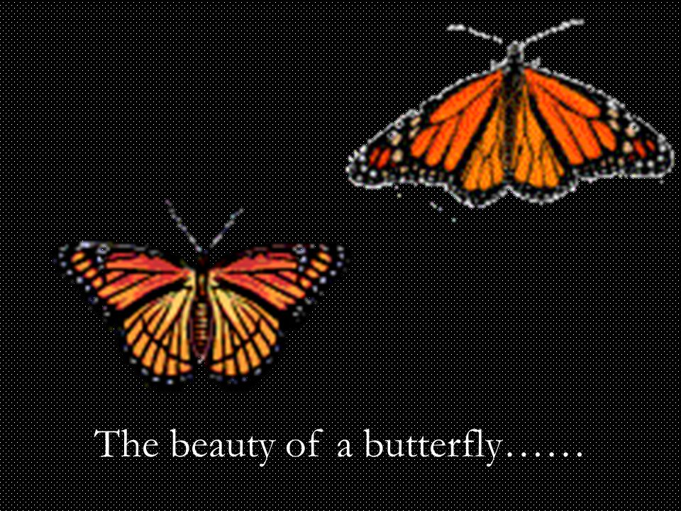 The beauty of a butterfly……