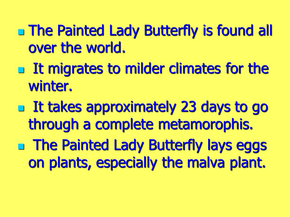 The Painted Lady Butterfly is found all over the world.