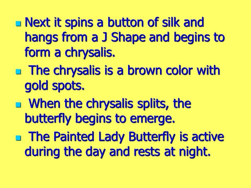 Next it spins a button of silk and hangs from a J Shape and begins to form a chrysalis.