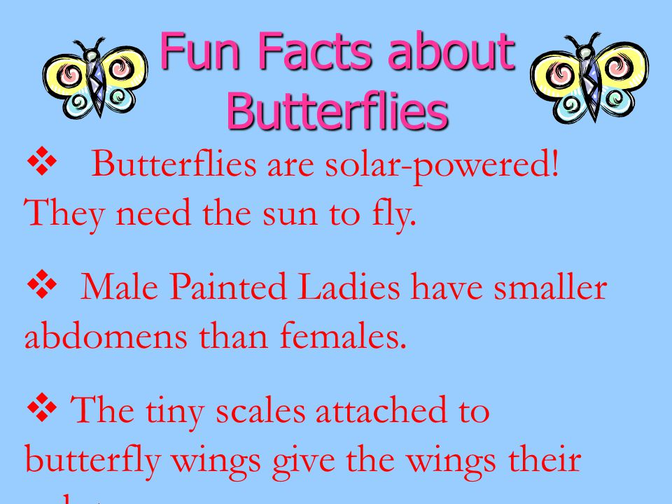 Fun Facts about Butterflies