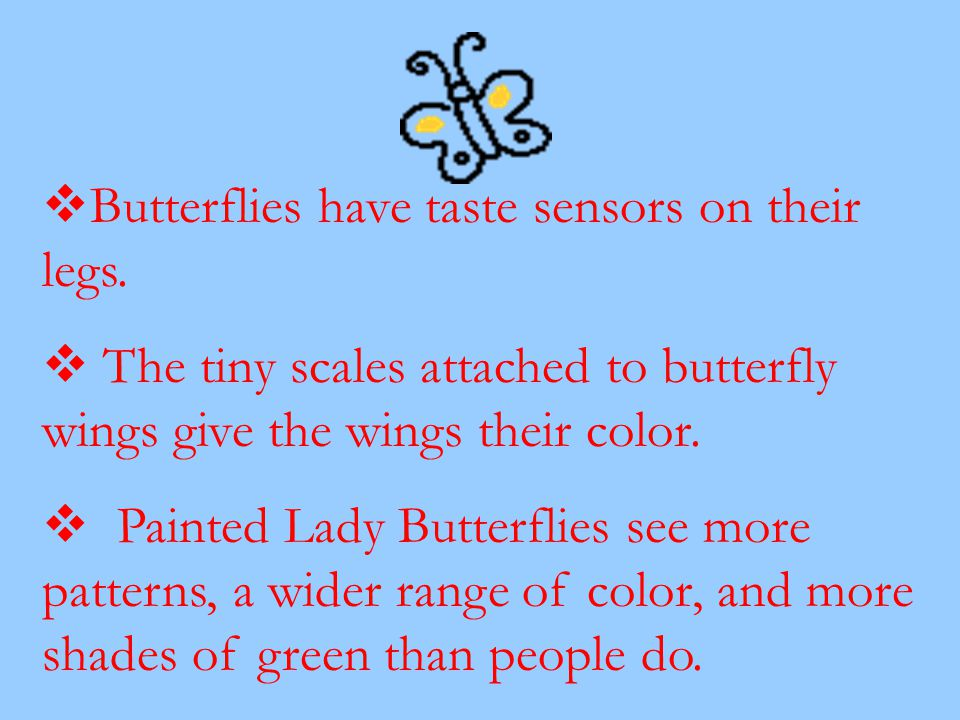 Butterflies have taste sensors on their legs.