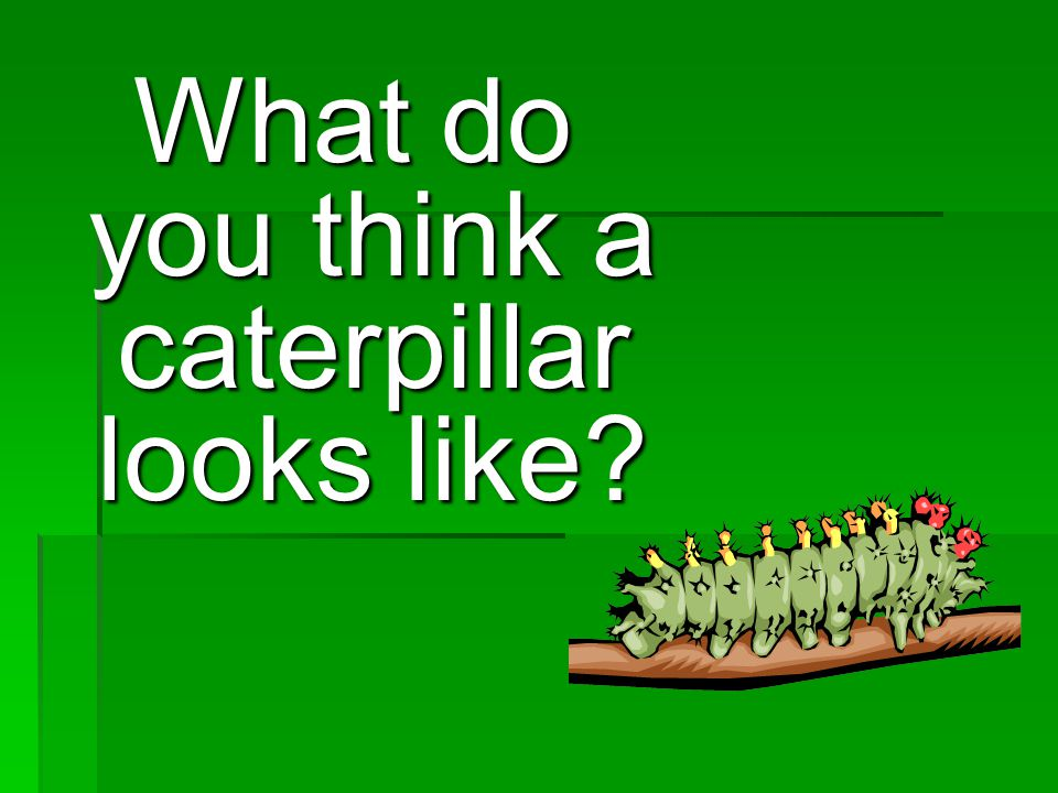 What do you think a caterpillar looks like
