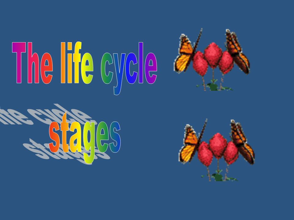 The life cycle stages