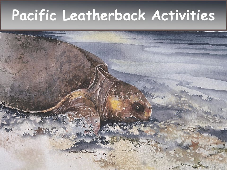 Pacific Leatherback Activities