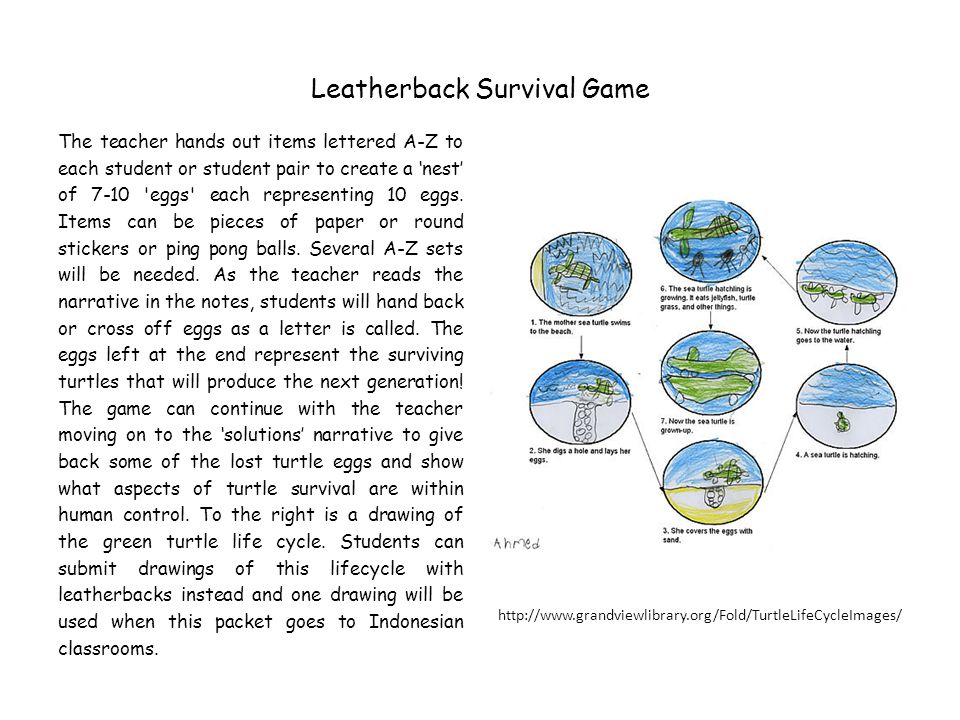 Leatherback Survival Game
