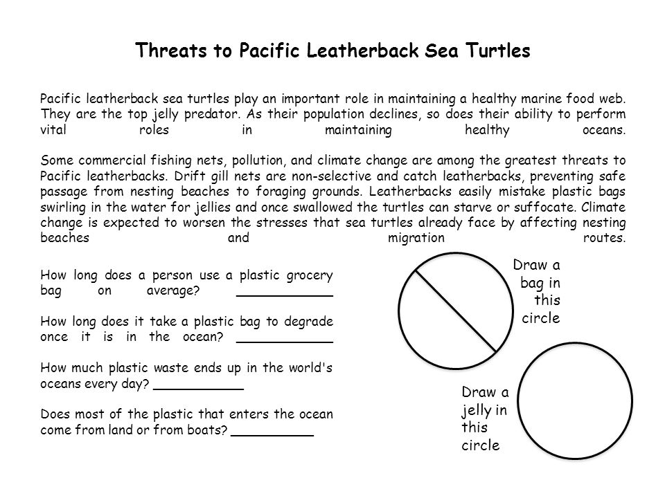 Threats to Pacific Leatherback Sea Turtles