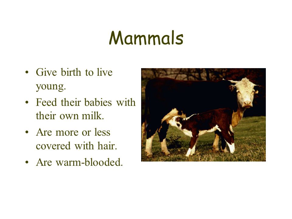 Mammals Give birth to live young.