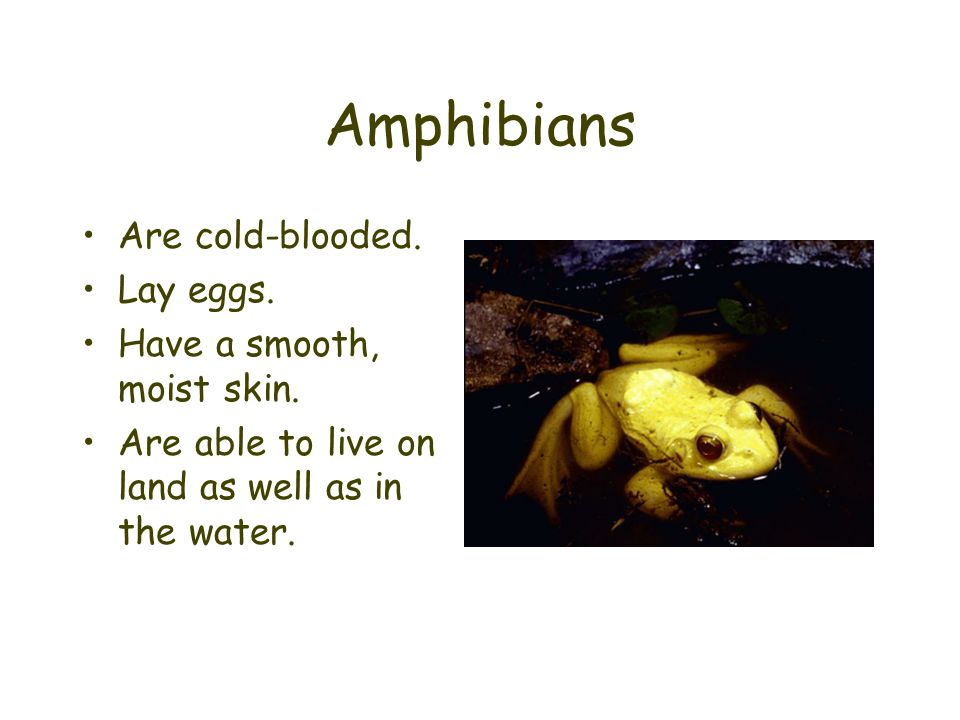 Amphibians Are cold-blooded. Lay eggs. Have a smooth, moist skin.