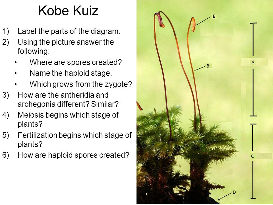 Kobe Kuiz Label the parts of the diagram.