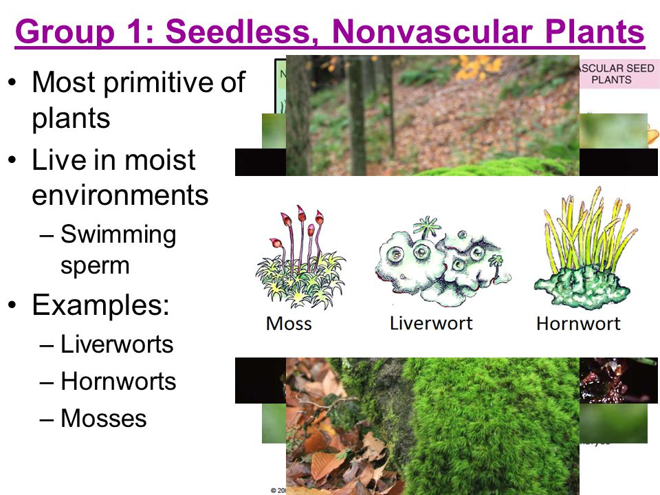 Group 1: Seedless, Nonvascular Plants
