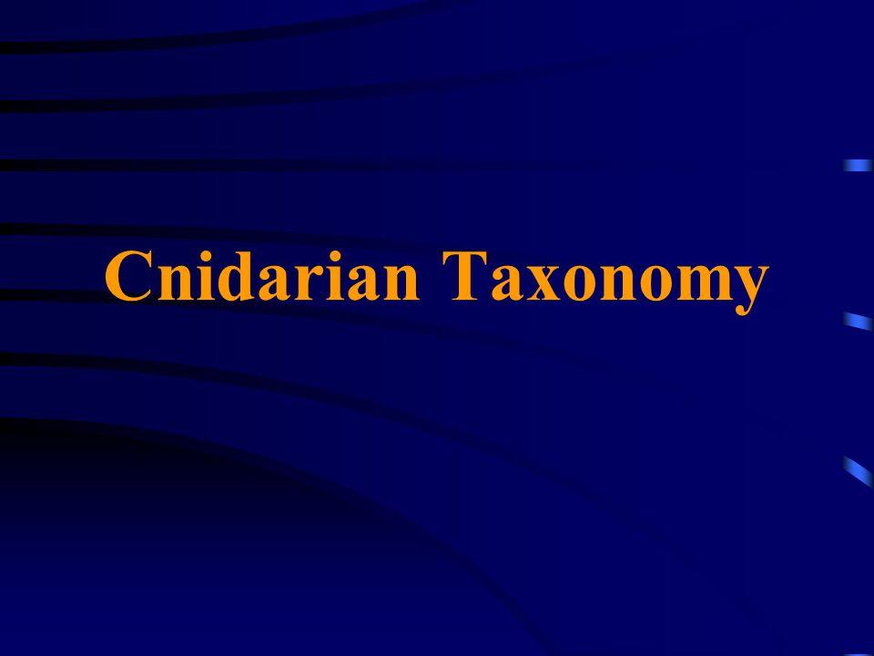 Cnidarian Taxonomy