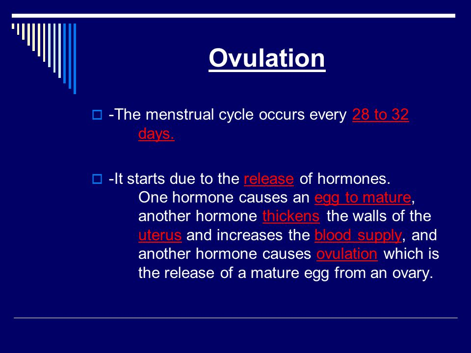 Ovulation -The menstrual cycle occurs every 28 to 32 days.