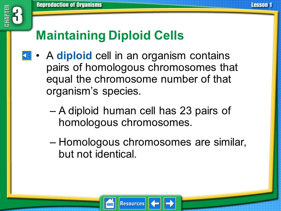 Maintaining Diploid Cells
