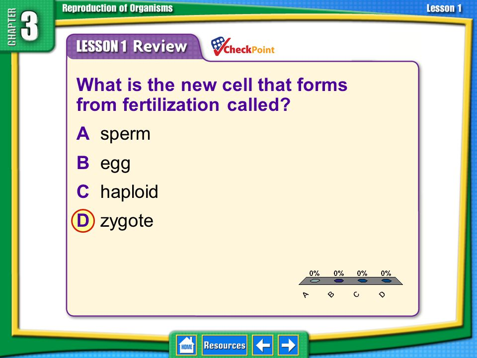 What is the new cell that forms from fertilization called A sperm
