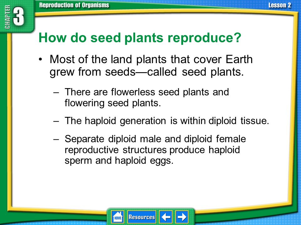 How do seed plants reproduce