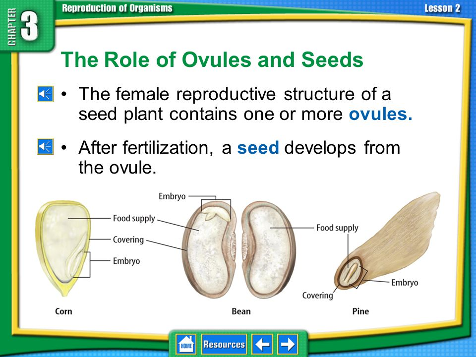 The Role of Ovules and Seeds