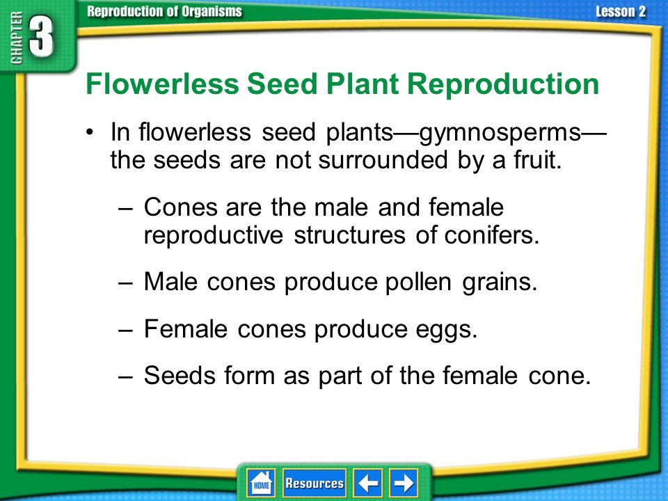 Flowerless Seed Plant Reproduction