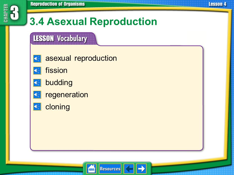 3.4 Asexual Reproduction asexual reproduction fission budding