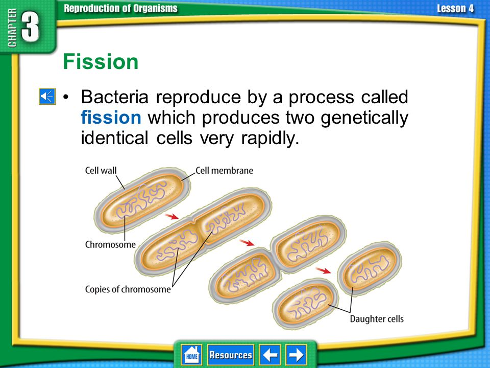 3.4 Asexual Reproduction Fission.