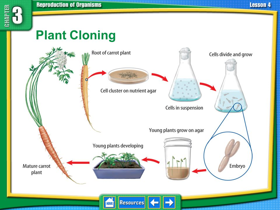 3.4 Asexual Reproduction Plant Cloning