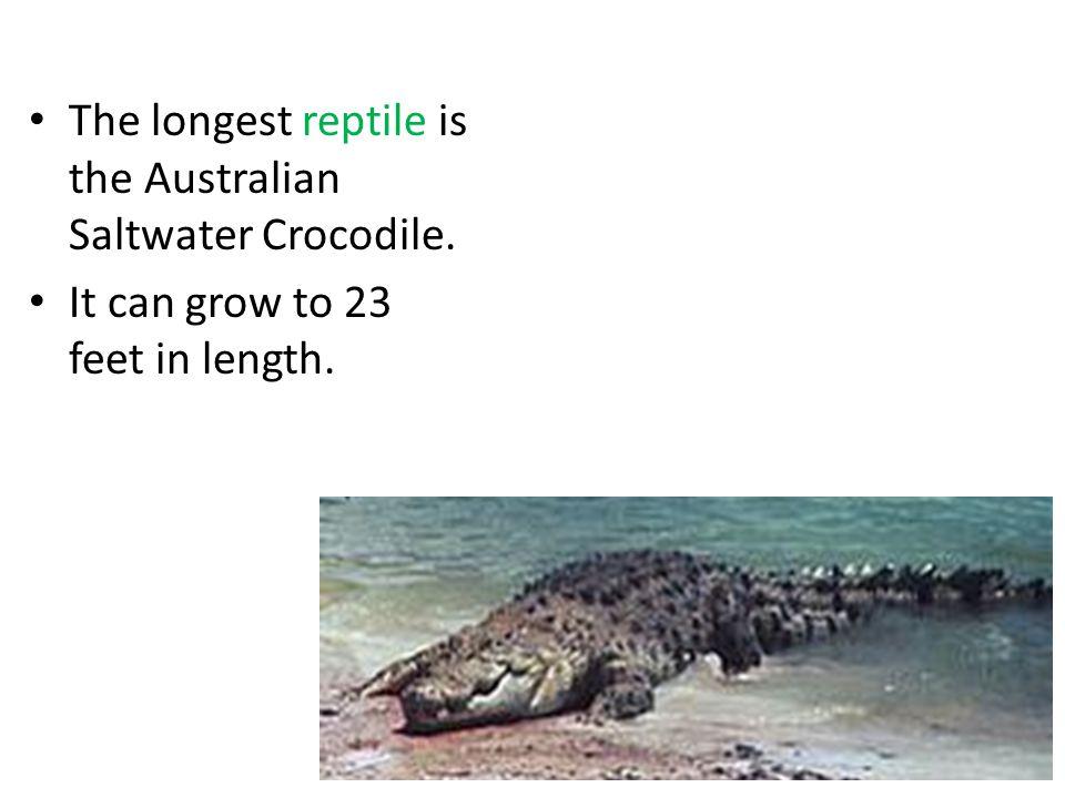The longest reptile is the Australian Saltwater Crocodile.