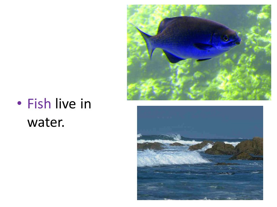 Fish live in water.