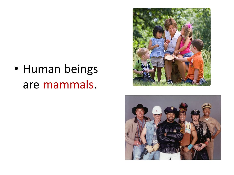 Human beings are mammals.