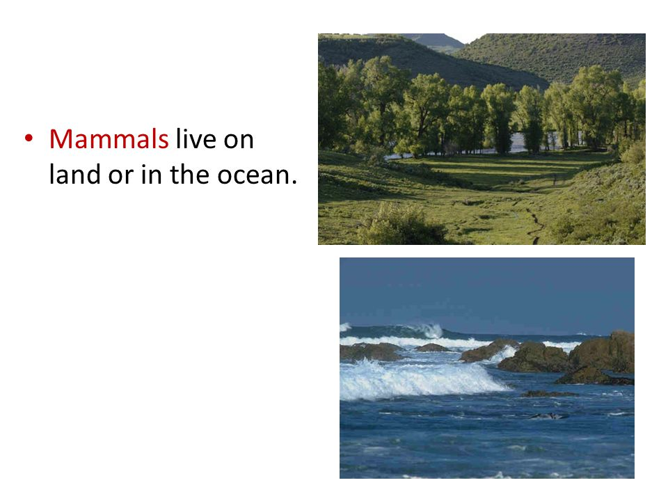 Mammals live on land or in the ocean.
