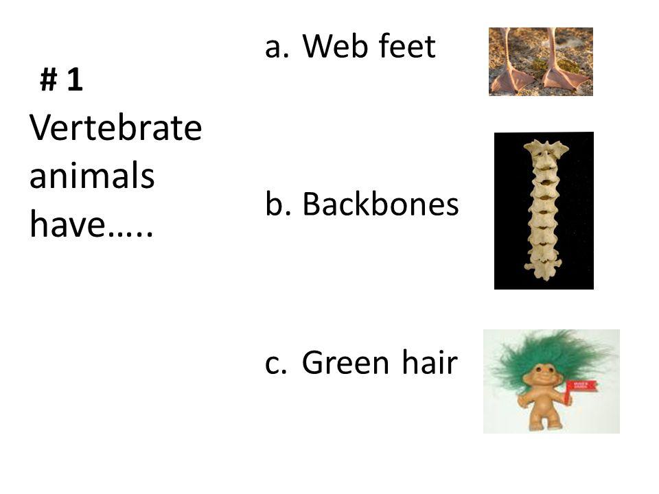 Vertebrate animals have…..