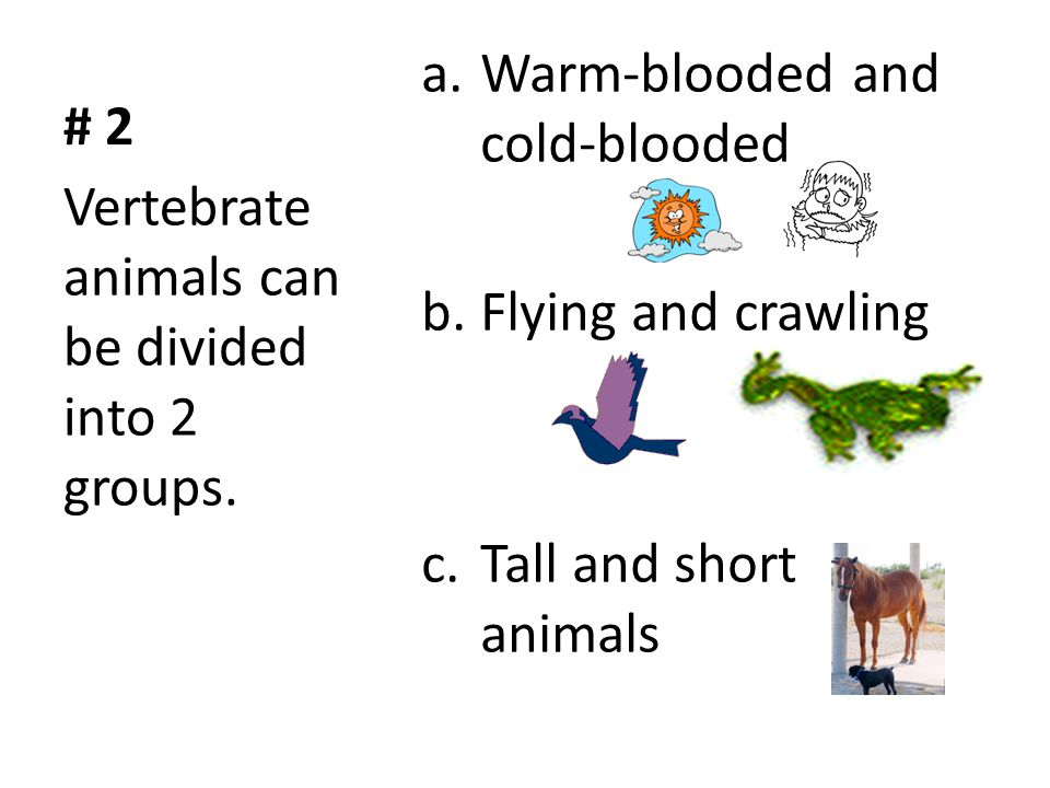 # 2 Warm-blooded and cold-blooded. Flying and crawling.