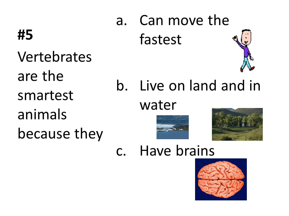 #5 Can move the fastest. Live on land and in water.