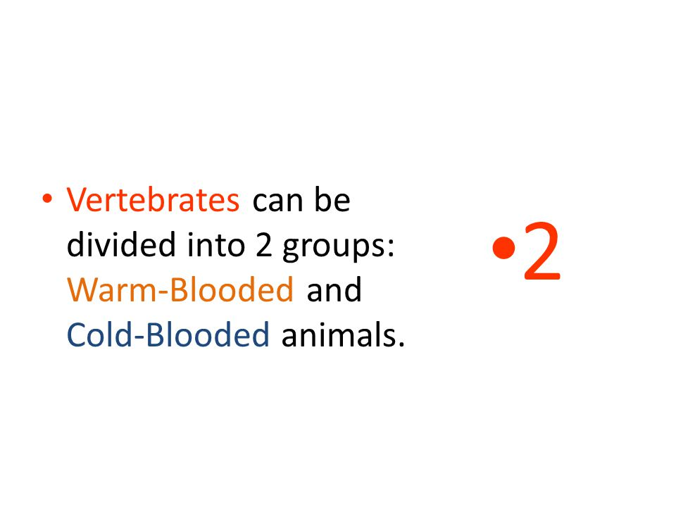 2 Vertebrates can be divided into 2 groups: Warm-Blooded and Cold-Blooded animals.