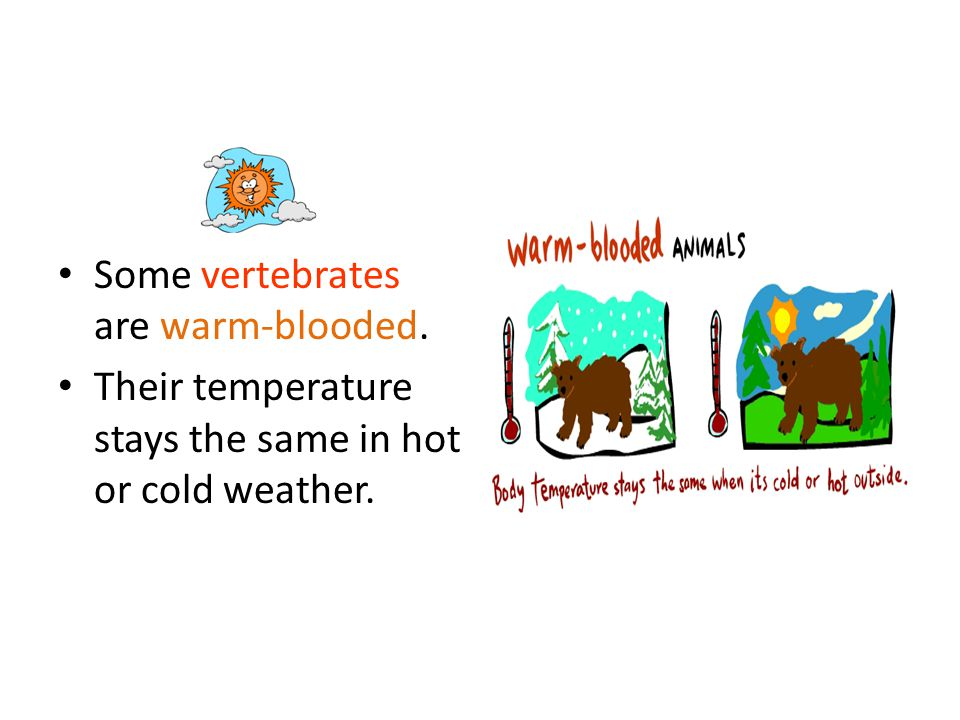 Some vertebrates are warm-blooded.