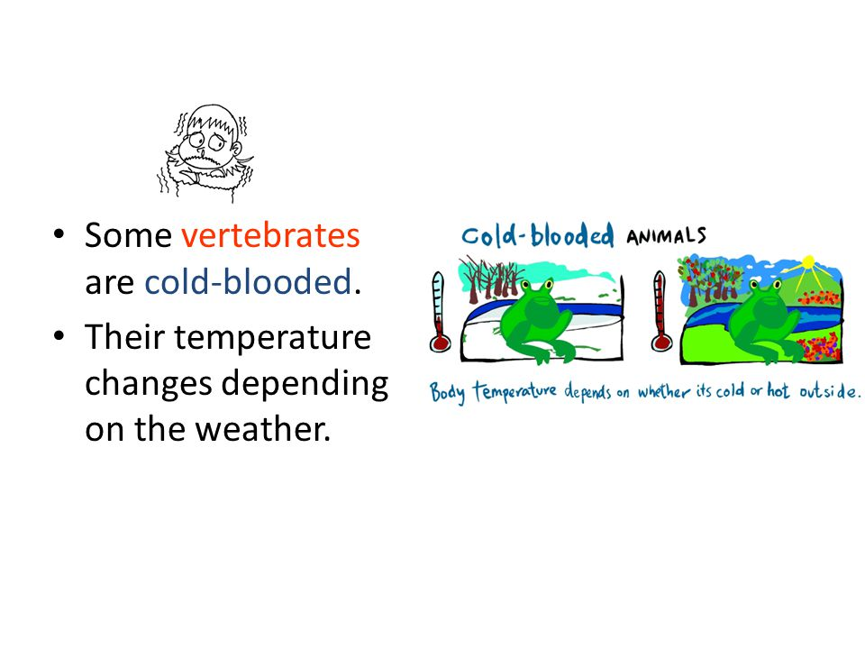 Some vertebrates are cold-blooded.