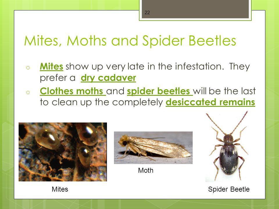 Mites, Moths and Spider Beetles