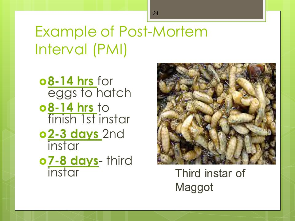 Example of Post-Mortem Interval (PMI)