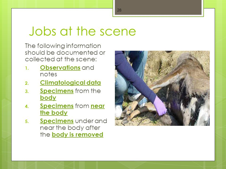 Jobs at the scene The following information should be documented or collected at the scene: Observations and notes.