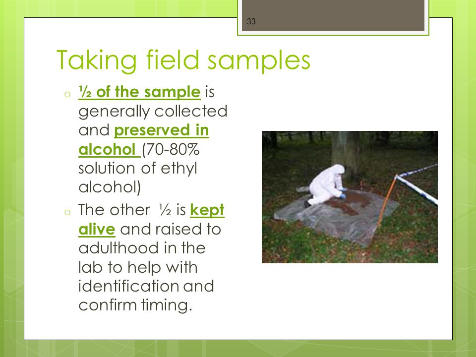 Taking field samples ½ of the sample is generally collected and preserved in alcohol (70-80% solution of ethyl alcohol)