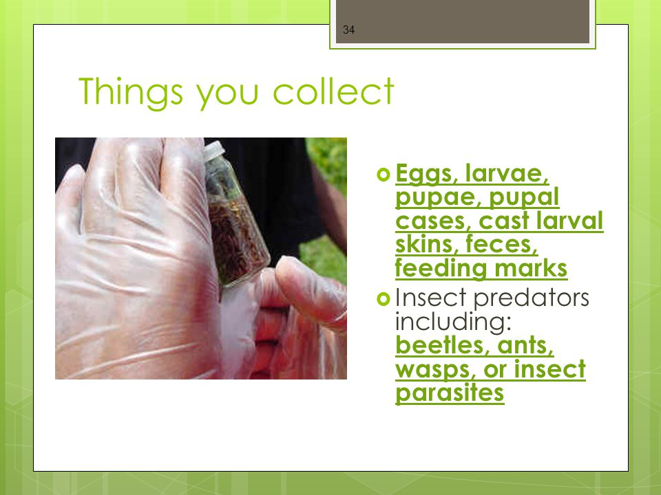 Things you collect Eggs, larvae, pupae, pupal cases, cast larval skins, feces, feeding marks.