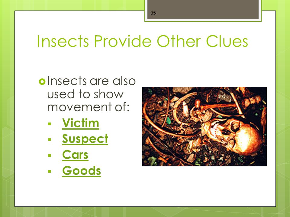 Insects Provide Other Clues